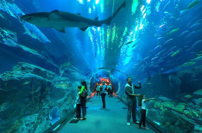 Visiter l'Aquarium de La Rochelle !